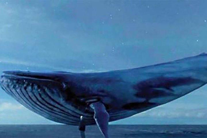 مراحل بازی نهنگ آبی ؛ چالش 50 روزه تا خودکشی به دستور نهنگ آبی !
